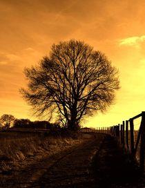 Sepia Baum von anowi