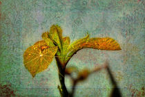 Yellow Iris by Doug McRae