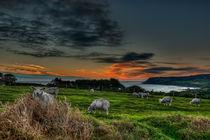 Sunrise over Robin Hoods Bay von Steve H Clark Photography