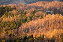 Waldhütte von Henning Hollmann