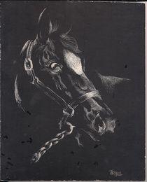'Horse portrait' von tiritilli