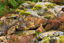 Lichens and Moss in Glen Strathfarrar by Louise Heusinkveld
