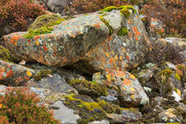 Moss and lichens in the Scottish Highlands von Louise Heusinkveld