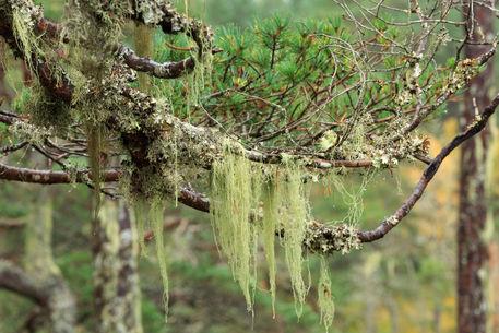 Lichens0194