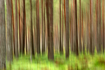 Woodland-abstract0252