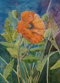 Mohn by Sabine Sigrist