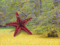 COMMON STARFISH STARRING ON EARTH by artistdesign