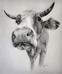 Cow-drawing-hr