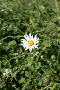 einsame Blume, Farbfotografie von Kathleen Follert