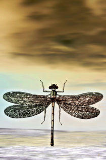 DRAGONFLY by Pia Schneider
