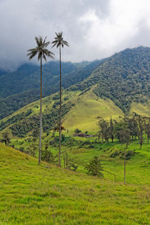 Valle de Cocora | Valley of Cocora by mg-foto