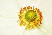 yellow on white von Doug McRae
