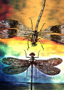 Dragonfly-meets-a-friend-final-displate