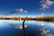 Himmel und Moor von Jens Uhlenbusch