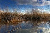Im Recker Moor von Jens Uhlenbusch