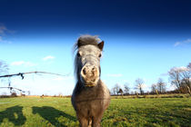 Pony von Jens Uhlenbusch