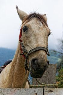 Pferdekopf | Horsehead von mg-foto