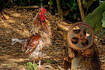 Hahn | Cock von mg-foto