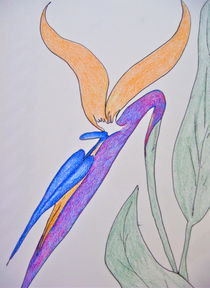Bird of Paradise in Colored Pencil von Christine Chase Cooper