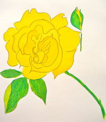 Yellow Rose in Colored Pencil von Christine Chase Cooper