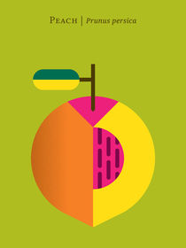 Fruit: Peach von Christopher Dina