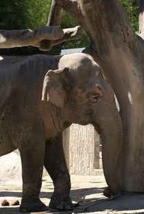 Indischer Elefant von Michael Neuneier