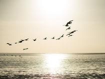Enten über dem Watt by fotografie-von-hein