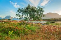 20130823-lofoten-0105-edit-2