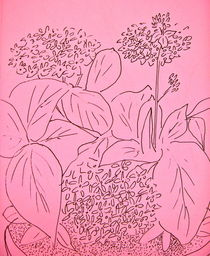 Hydrangea in Pink by Christine Chase Cooper