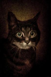 Cat's Eyes #04 von loriental-photography