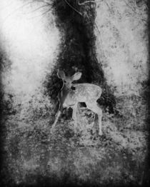 Lost-fawn-3