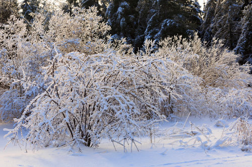 After-the-ice-storm0299