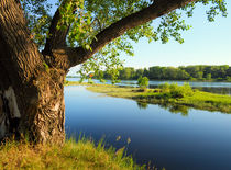 Big tree on the bank of the river by larisa-koshkina