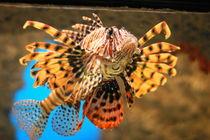 Feuerfisch von Michael Neuneier