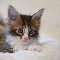Dsc1405-dot-mc-kitten2-01-14