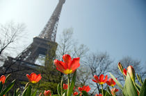 Eiffel Tower and tulips, Paris, France by aelita