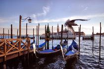 Gondolas with San Giorgio Maggiore in the background, Venice, Veneto, Italy by aelita