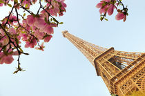 Magnolia tree in bloom and Eiffel Tower, Paris, France by aelita
