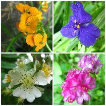 flower meddley von Sabine Cox