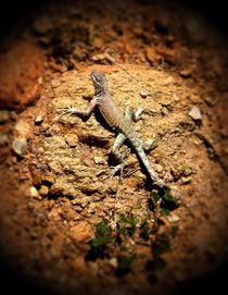 Lizard von Sabine Cox