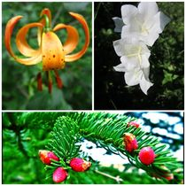Flower Meddley 3 by Sabine Cox