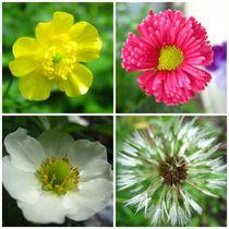 Flower Meddley 4 by Sabine Cox