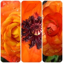 Orange Collage von Sabine Cox