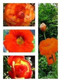 Orange Collage 2 by Sabine Cox