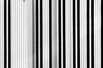 Schwarz weiß gestreift  by Bastian  Kienitz