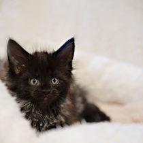 Dsc1580-dot-mc-kitten12-01-14