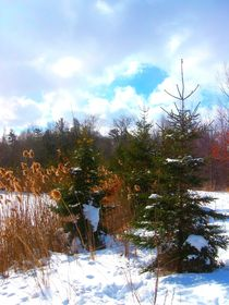 firs in the snow von Sabine Cox