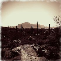 Arizona Desert by Sabine Cox
