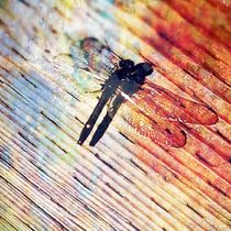 Dragonfly by Sabine Cox