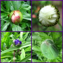 Collage of Buds by Sabine Cox